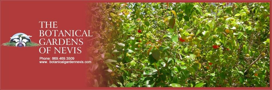 Tropical Fruit Garden | The Botanical Gardens of Nevis